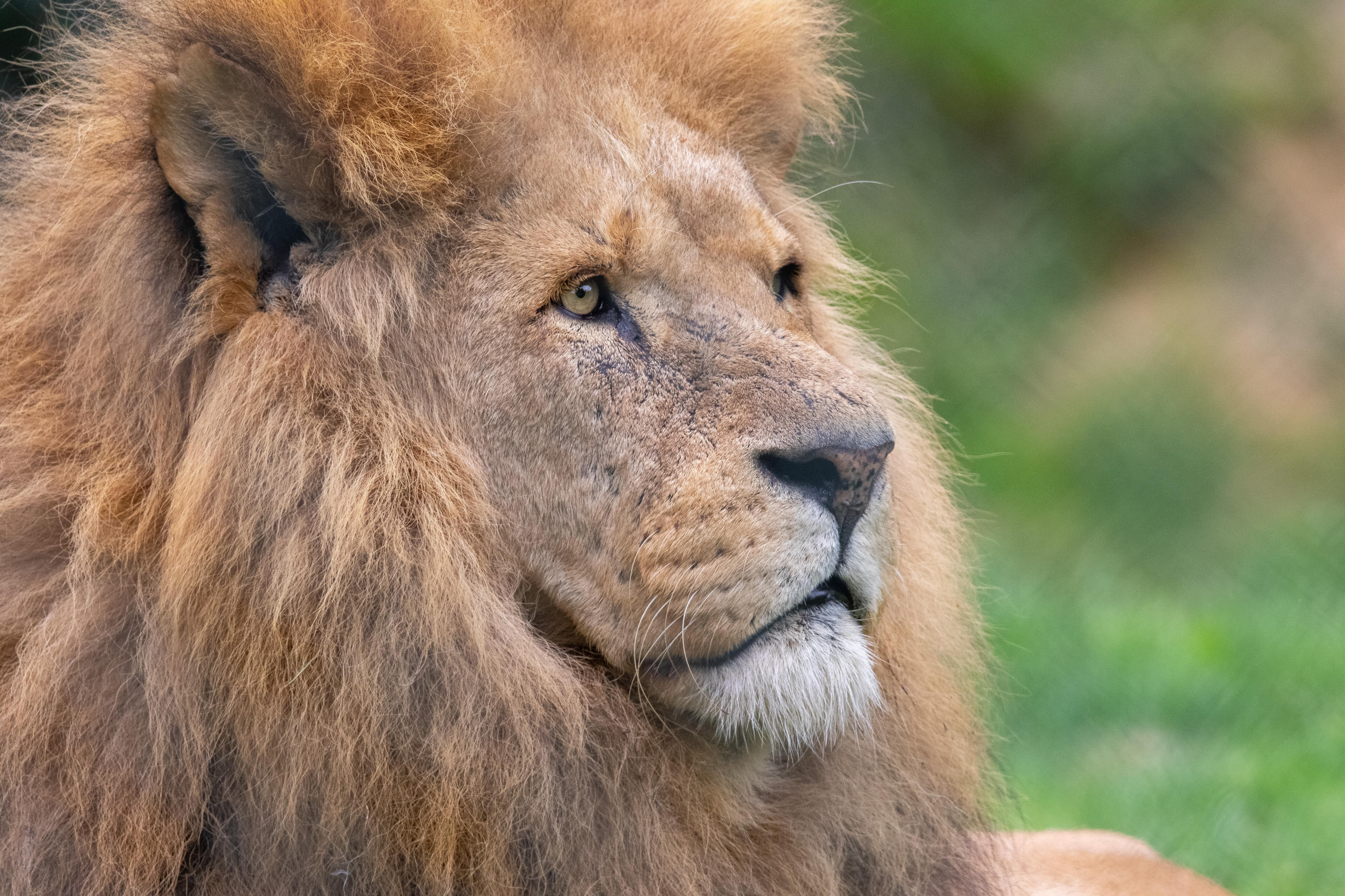 lemur africa alive