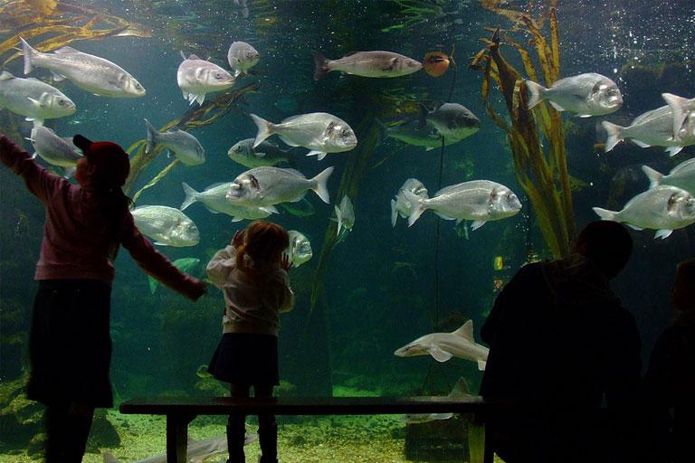 looking at fish at anglesey sea zoo