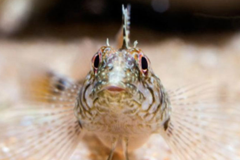 sand fish at anglesey sea zoo