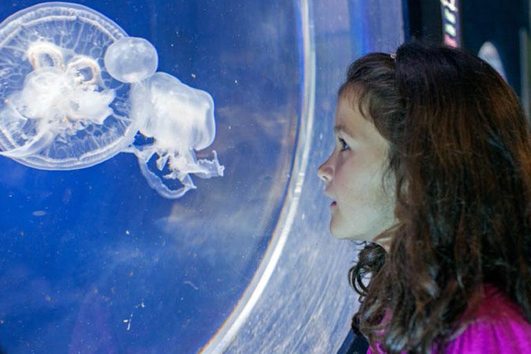 kid and jellyfish at anglesey sea zoo