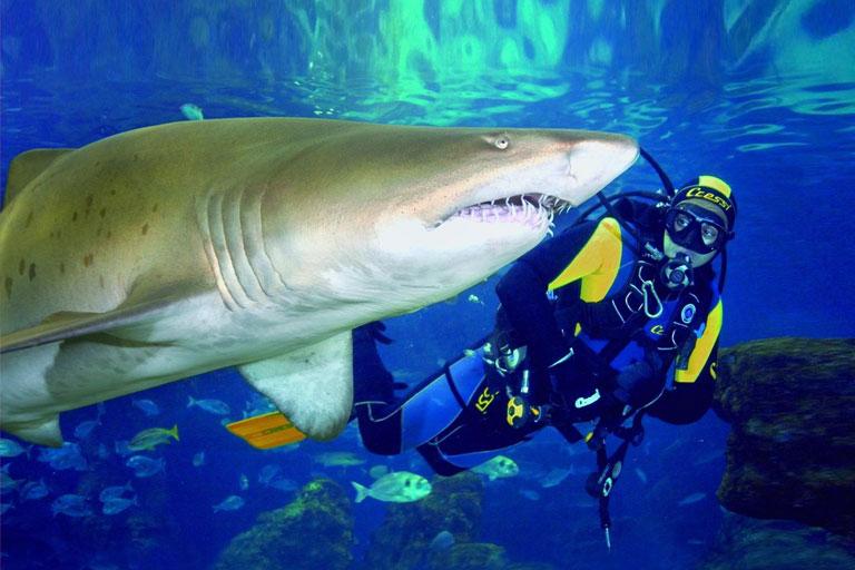diver at blue planet aquarium