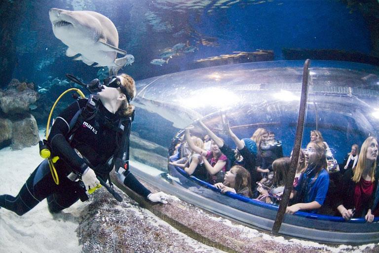 viewing tunnel at blue planet aquarium