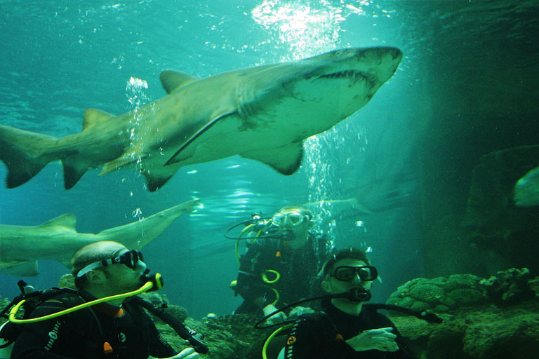 shark diving experience at blue planet aquarium