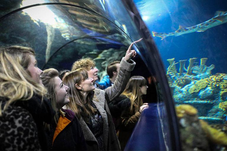 people at bristol aquarium in tunnel