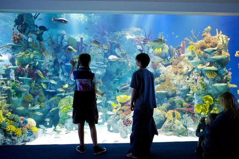 kids at bristol aquarium