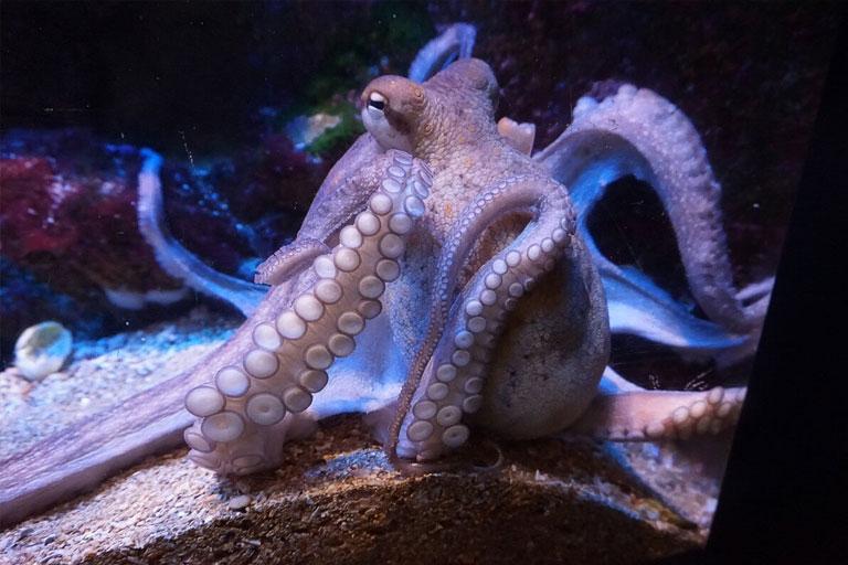 octopus at bristol aquarium
