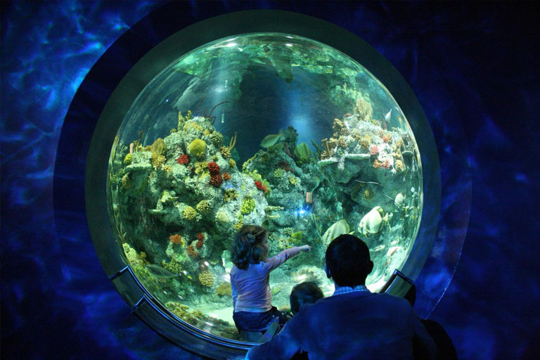 viewing portal at bristol aquarium