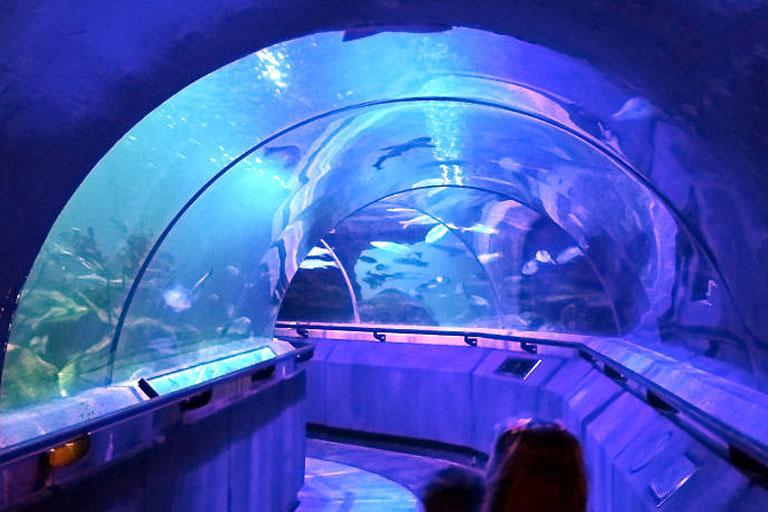 underwater tunnel deep sea world