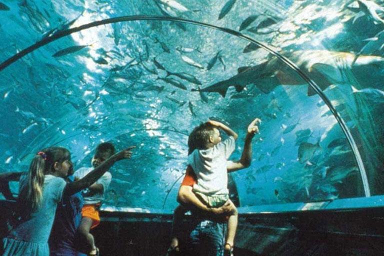 family at deep sea world
