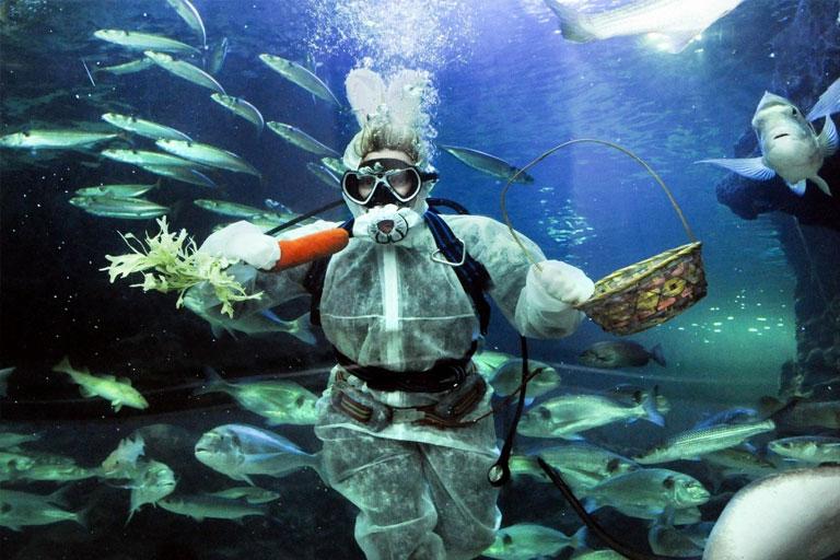 diver at deep sea world