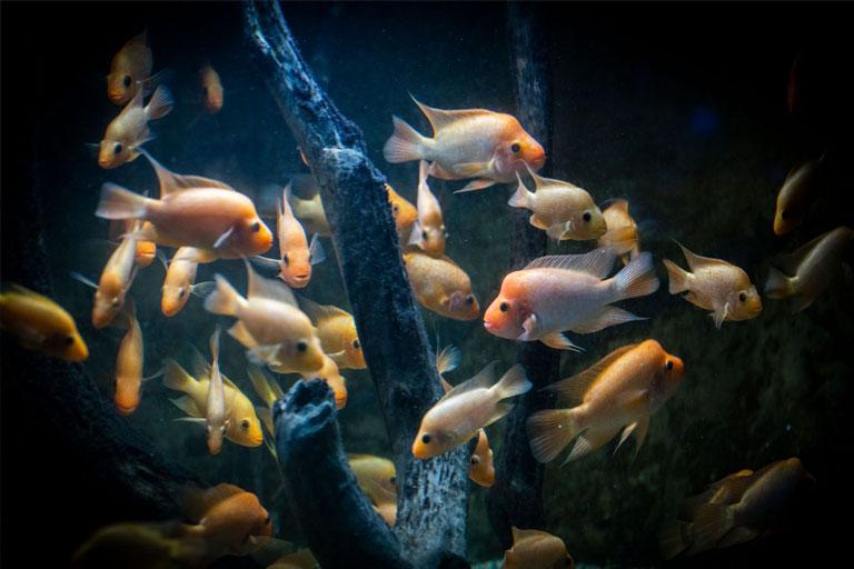 fish in darkness at deep sea world