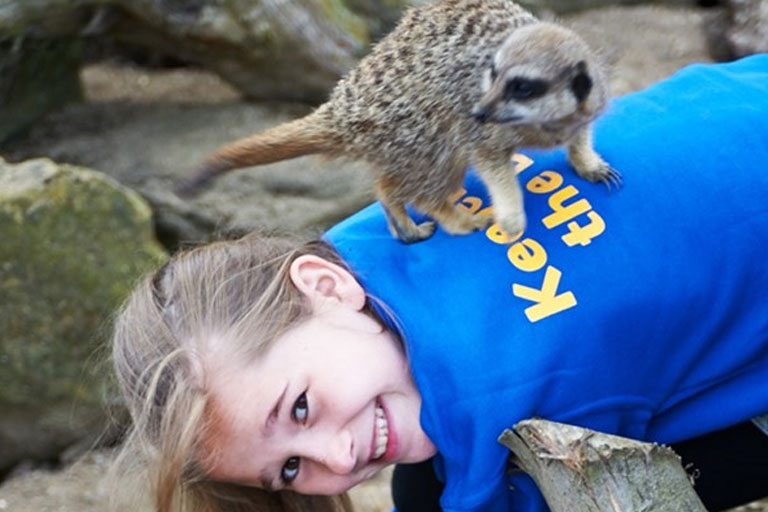 child playing with meerkat