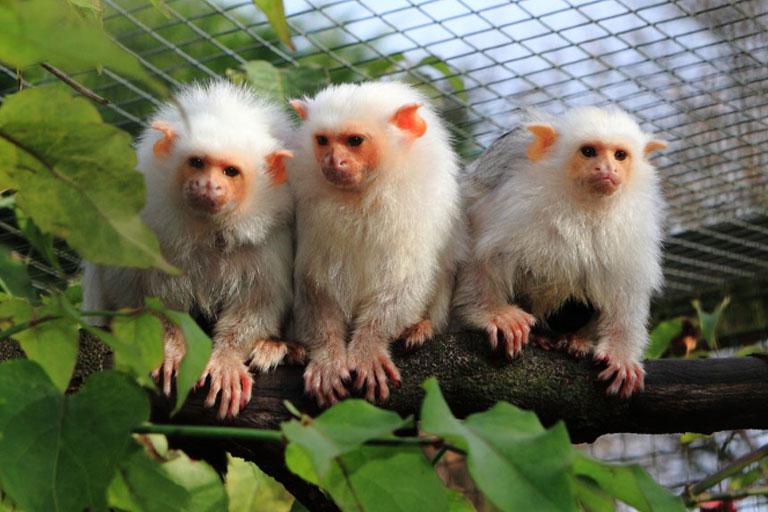 three cheeky monkeys