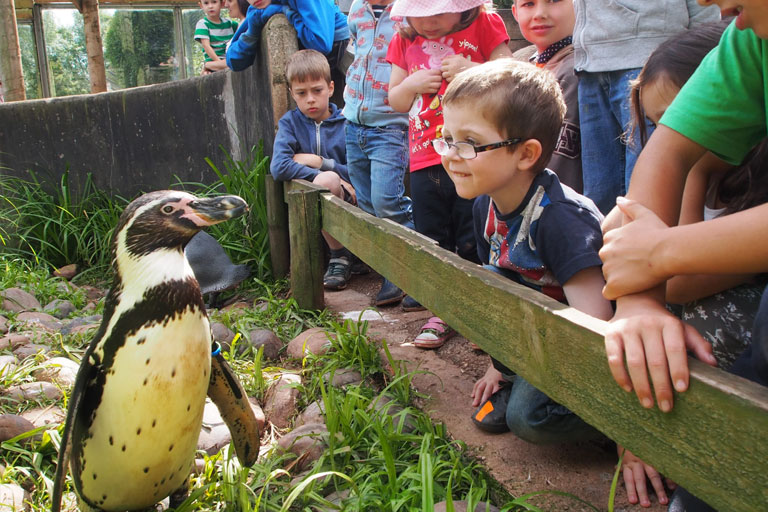penguins at south lakes zoo