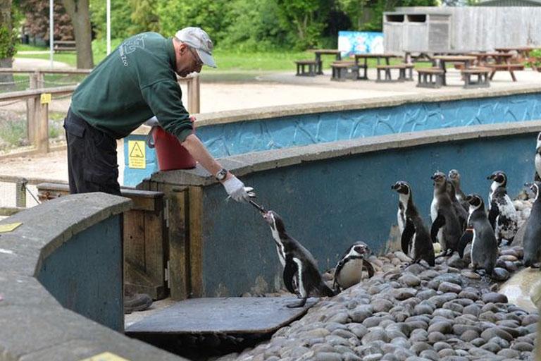 feeding penguins twycross zoo