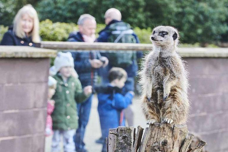 meerkats twycross zoo