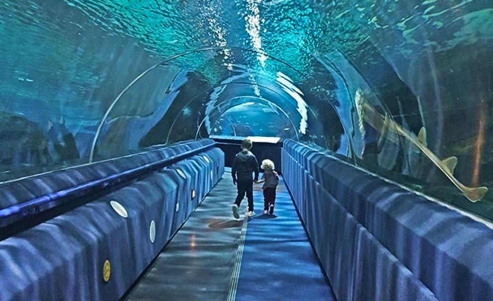 tunnel at blue planet aquarium