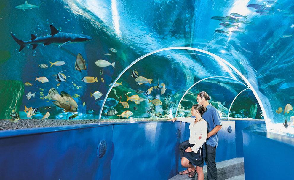 young couple at aquarium