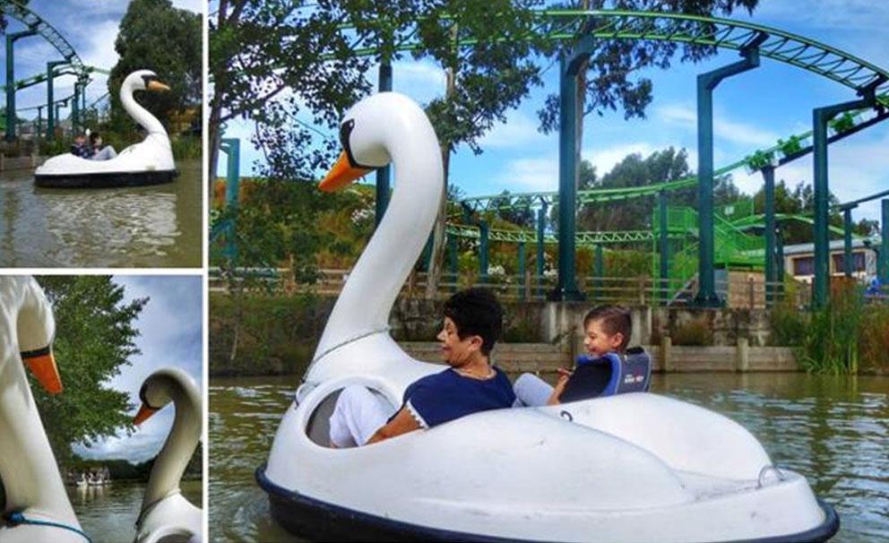 family swan boat ride