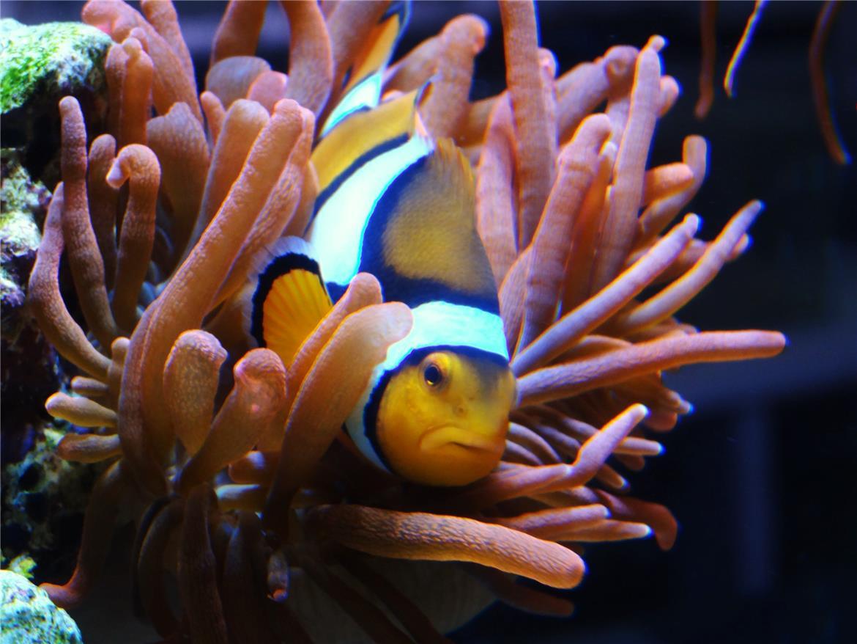 Blue Planet Aquarium's BLUE TANG STORY header image