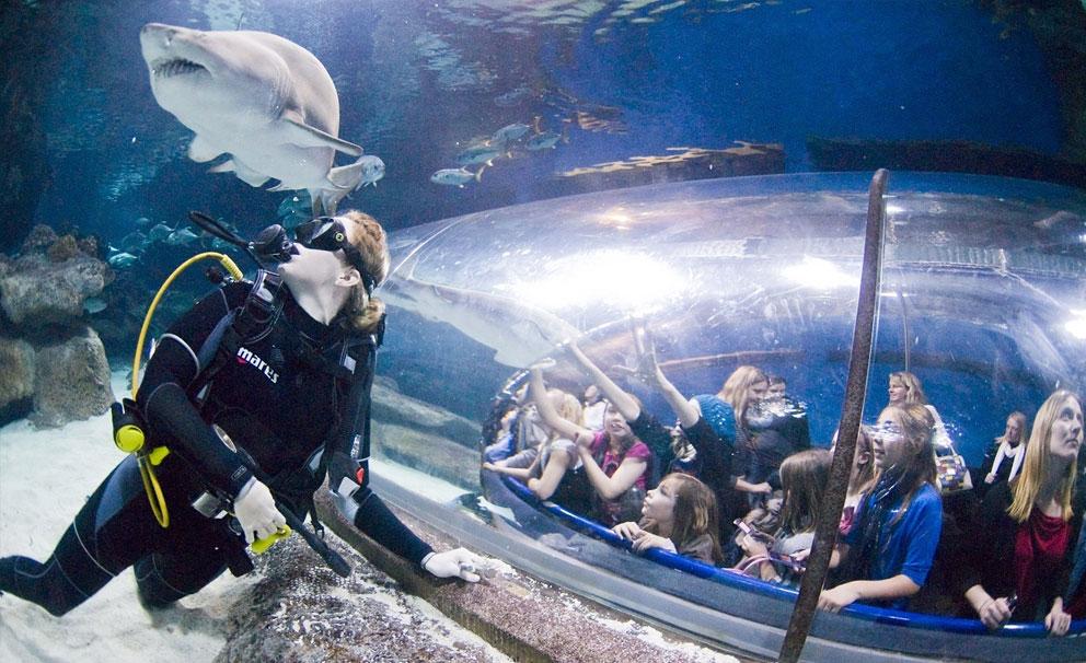 blue planet aquarium diver