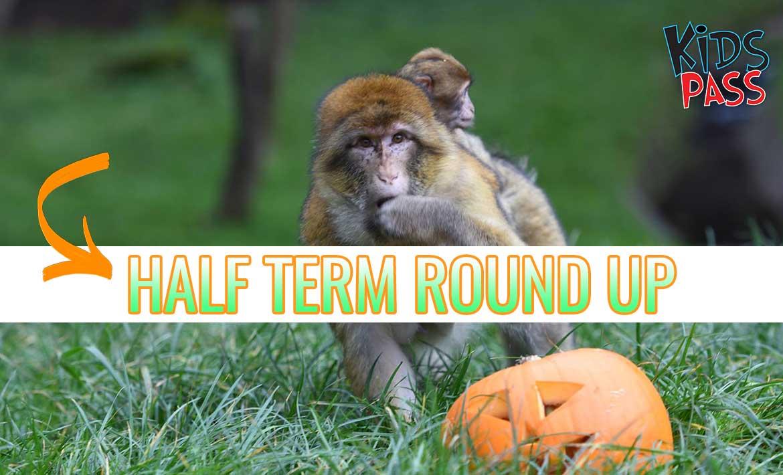 Half Term Round Up header image